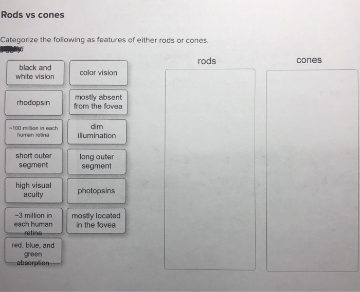 Solved Rods Vs Cones Categorize The Following As Features