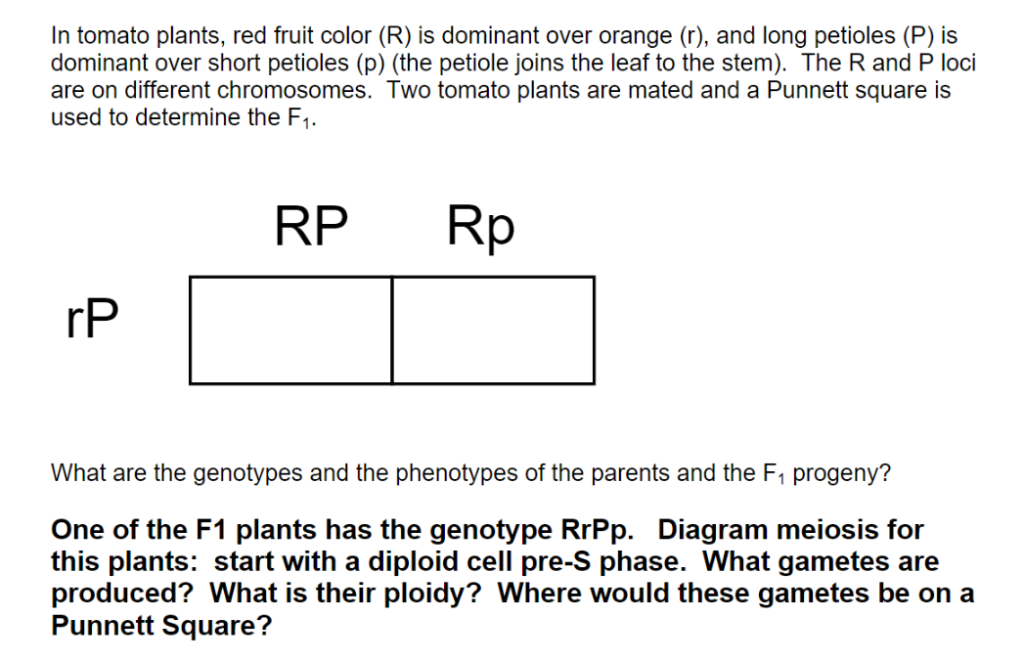 in tomato plants, red fruit color (r) is dominant over orange (r