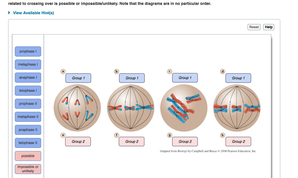 Solved  Part A The    Stages       Of Meiosis    Can You Recognize Th