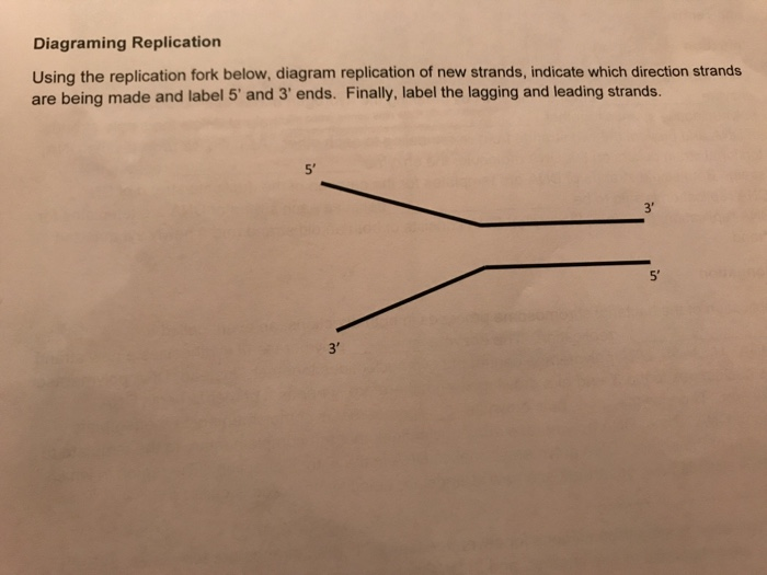 Solved Diagraming Replication Using The Replication Fork