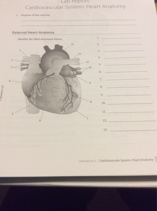 Solved Lab Report Cardiovascular System Heart Anatomy 1