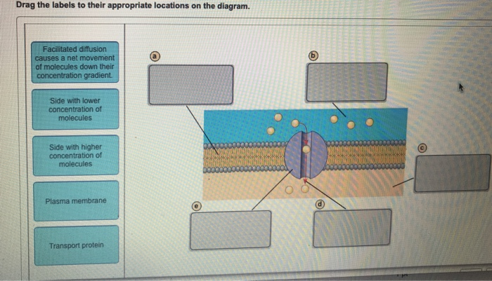 Facilitated Diffusion Diagram