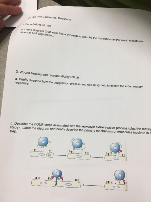 Solved: 25 Pts) Conceptual Questions 1  Foundations (5 Pts