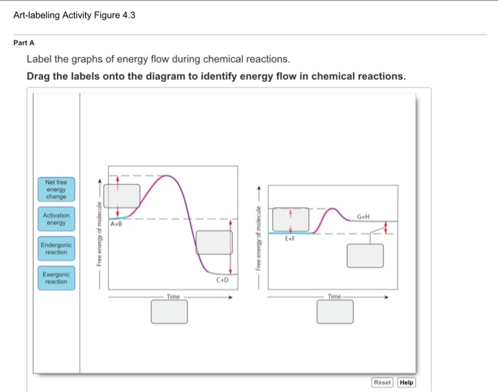 Solved Label The Graphs Of Energy Flow During Chemical Re