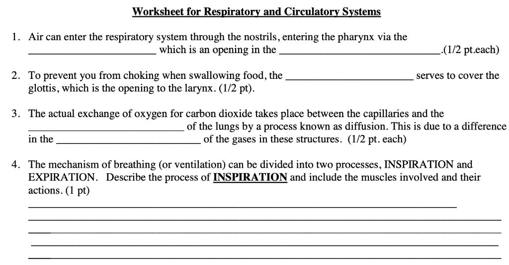 Solved: Worksheet For Respiratory And Circulatory Systems ...