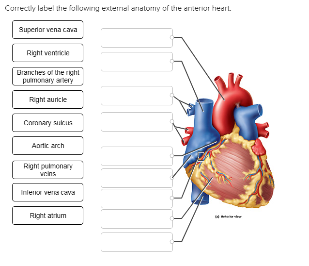 Solved: Correctly Label The Following External Anatomy Of