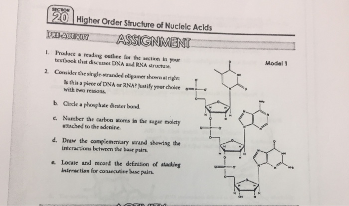 0 | higher order structure of nucleic acids rebaecyassignment producea  reading outline for the section in