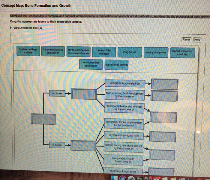 Solved: Concept Map: Bone Formation And Growth Drag The Ap