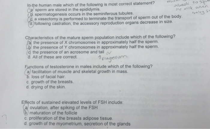 Solved: In The Human Male Which Of The Following Is Most C