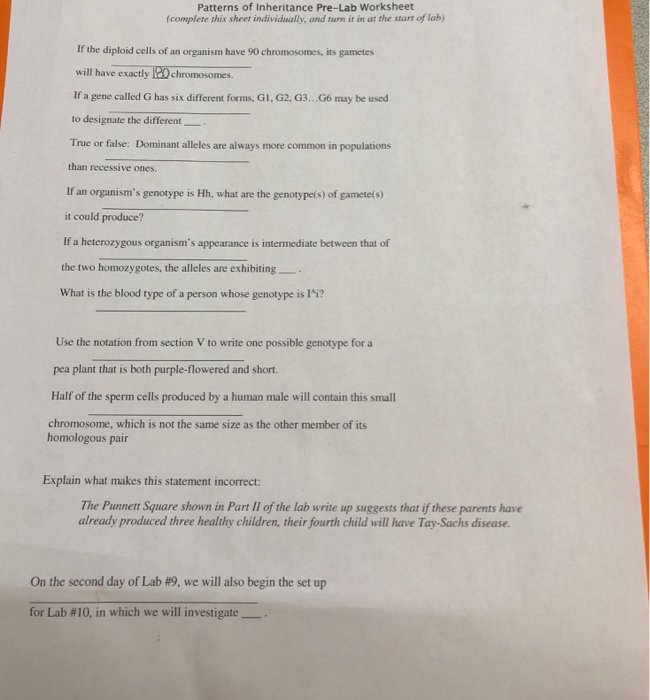 Solved Patterns Of Inheritance Pre Lab Worksheet Complet