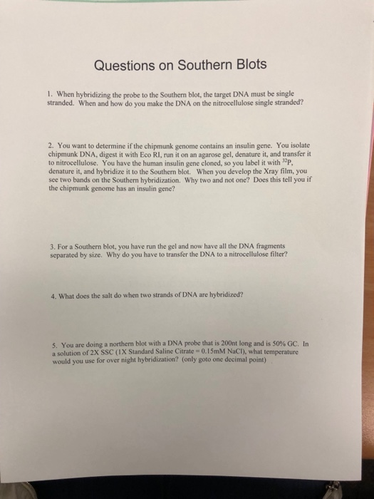 Solved questions on southern blots 1 when hybridizing th question questions on southern blots 1 when hybridizing the probe to the southern blot the target dna mu ccuart Images
