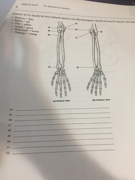 EXERCISE EIGHT The Appendicular Skeleton Questions 44 52 Identify Bony Landmarks Labeied In