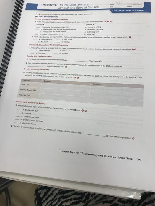 autonomic nervous system questions and answers pdf