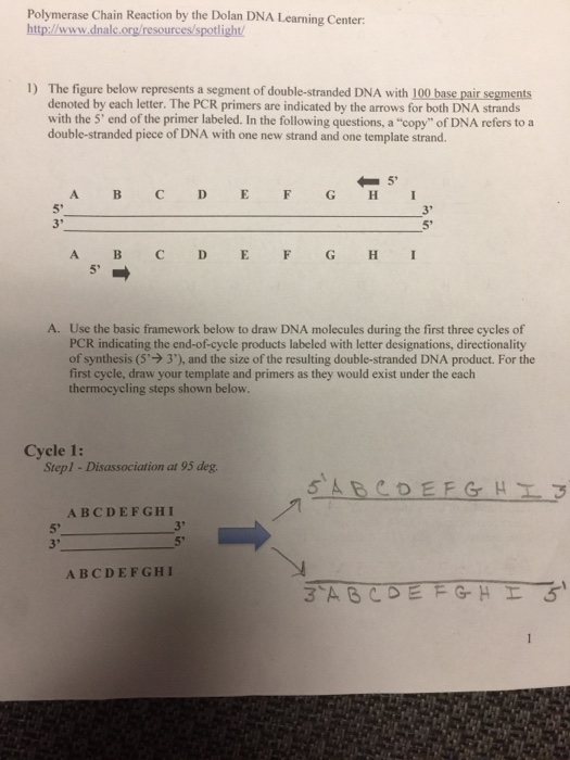 polymerase chain reaction thesis