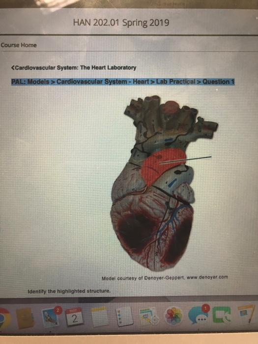 Solved: HAN 202 01 Spring 2019 Course Home (Cardiovascular
