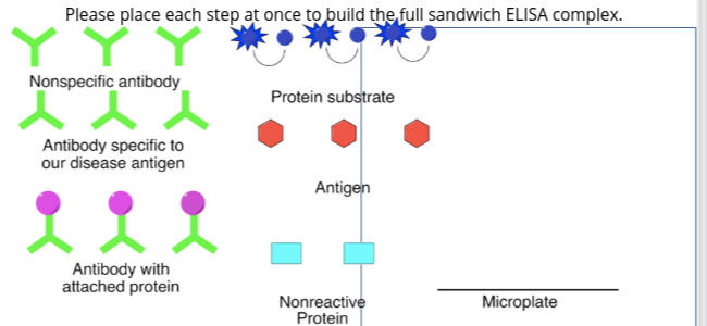 Please place each step at once to build the,full sandwich ELISA complex Nonspecific antibody Protein substrate Antibody speci