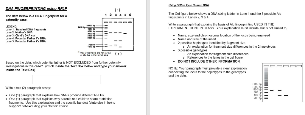 Bestseller: Dna Fingerprinting Study Guide Answers