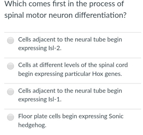20125c1db730 Question  Which comes first in the process of spinal motor neuron  differentiation  Cells adjacent to the ne.