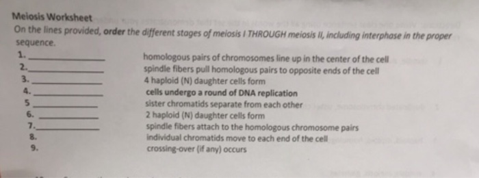 Solved Meiosis Worksheet On The Lines Provided Order The