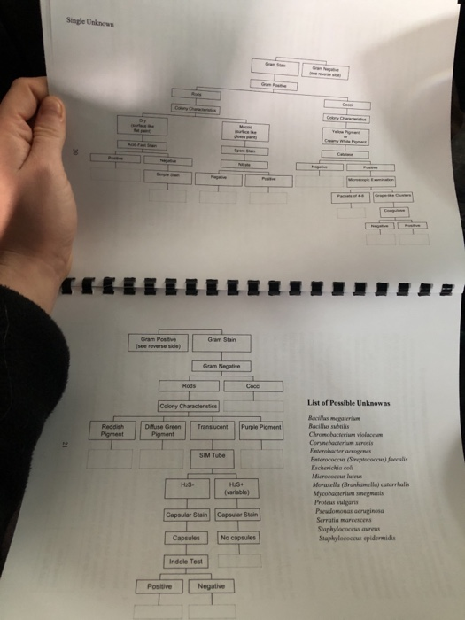 Solved Fill In Bottom Blanks Of Both Pages Of Flow Chart