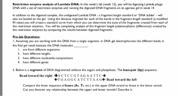 Gel Electrophoresis Worksheet Answer Key