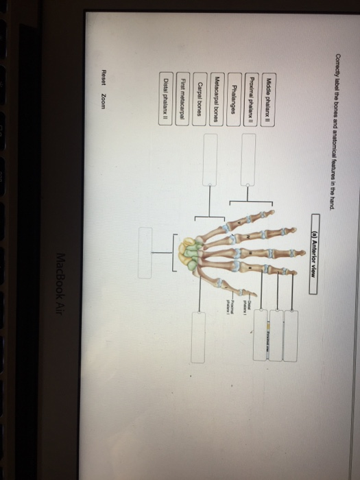 Used College Textbooks >> Solved: Correctly Label The Bones And Anatomical Features ... | Chegg.com