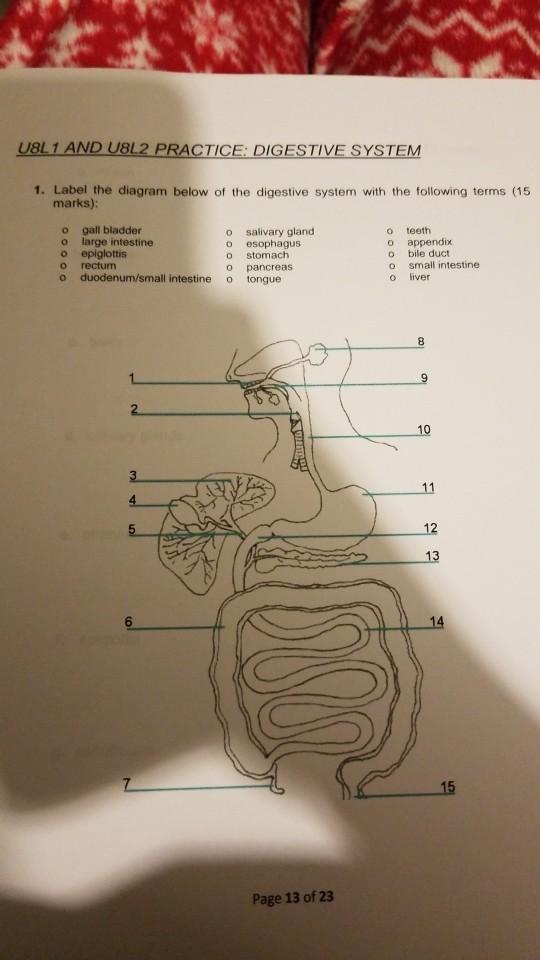 Solved Ubliandu8l2 Practice Digestive System 1 Label Th