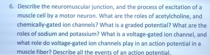 6. Describe the neuromuscular junction, and the process of excitation of a muscle cell by a motor neuron. What are the roles of acetylcholine, and chemically-gated ion channels? What is a graded potential? What are the roles of sodium and potassium? What is a voltage-gated ion channel, and what role do voltage-gated ion channels play in an action potential in a muscle fiber? Describe all the events of an action potential.