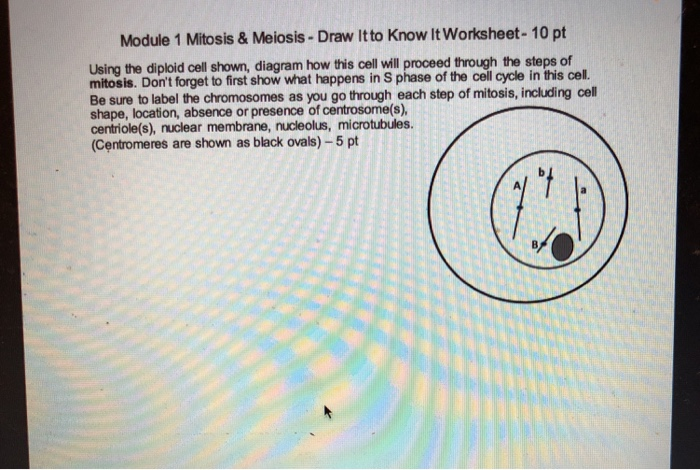 Solved: Module 1 Mitosis & Meiosis- Draw Itto Know It Work ...