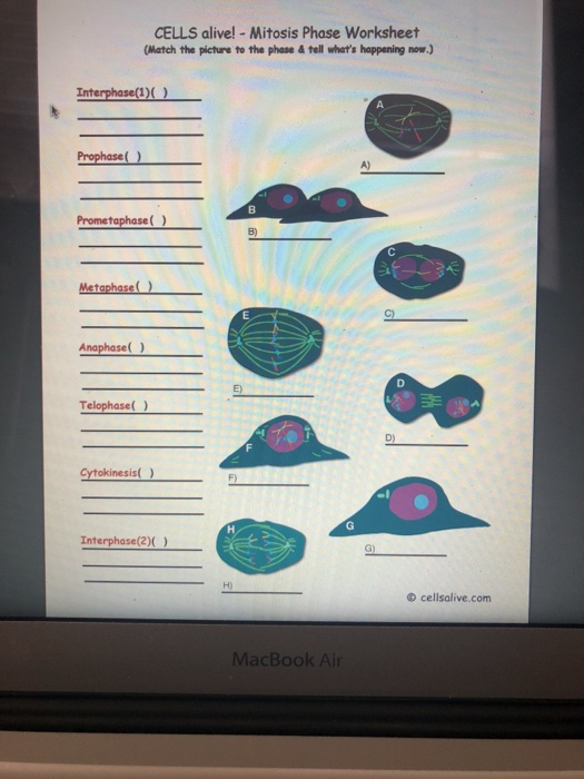 Solved Cells Alive Mitosis Phase Worksheet Match The P