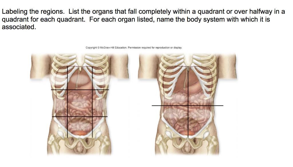 The 4 Abdominal Quadrants Regions U0026 Organs Manual Guide
