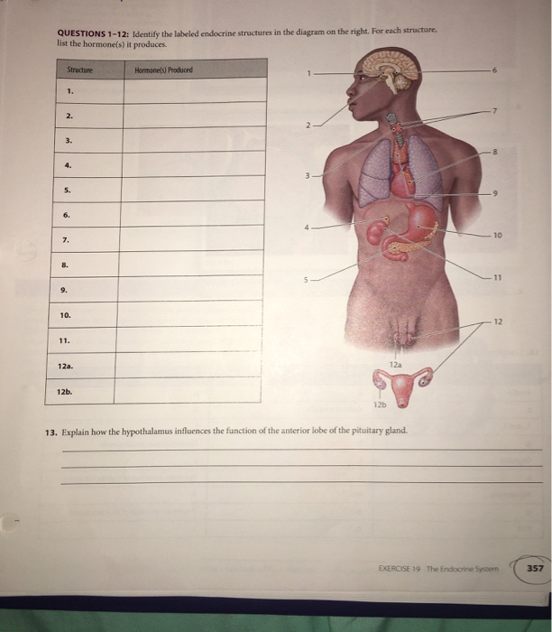 Solved Questions 1 12 Identify The Labeled Endocrine Str