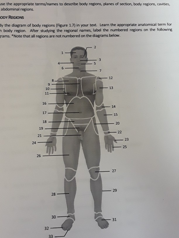 ody regions y the diagram of body regions (figure 1 7) in your text  learn  the appropriate anatomical