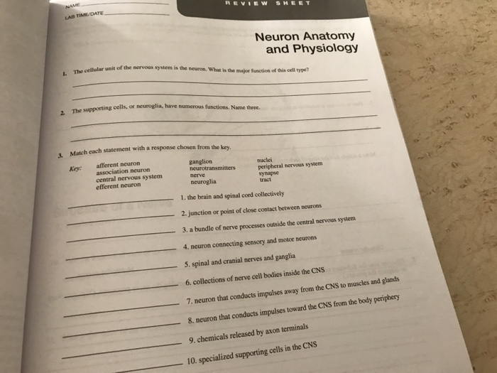 Solved: REVIEW SHEET LAB Neuron Anatomy And Physiology The ...