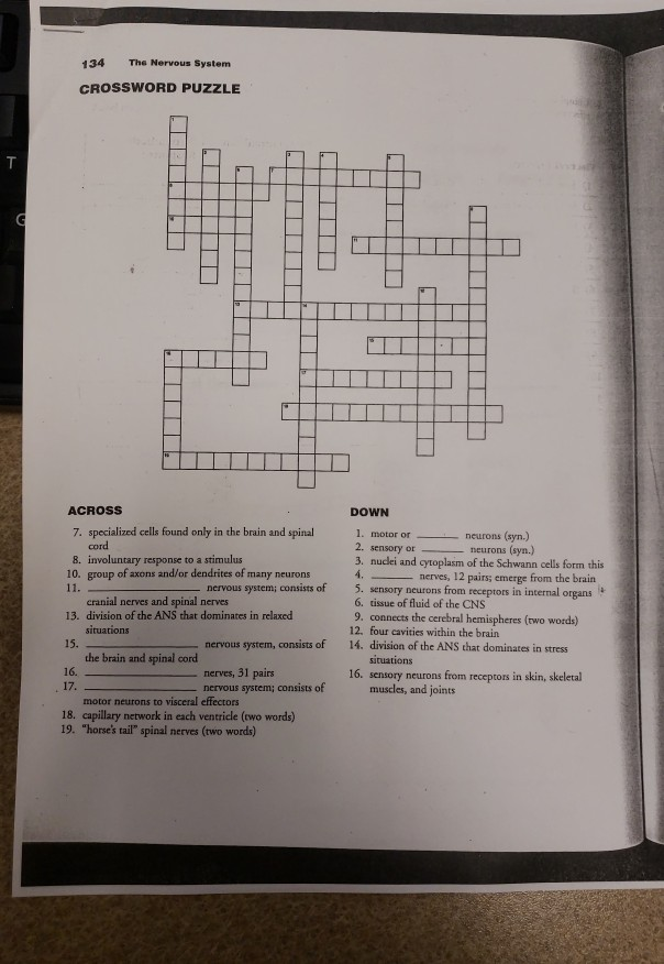 Chapter 7 Crossword Puzzle Answer Key | crossword template