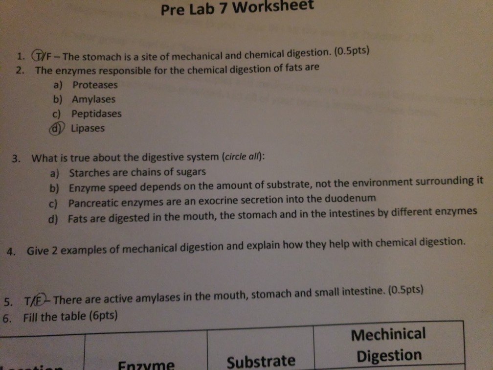 mechanical digestion and chemical digestion
