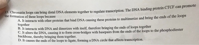 rotein Chromatin loops can bring distal DNA elen the formation of these loops because interacts with other proteins that bind