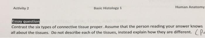anatomy essay