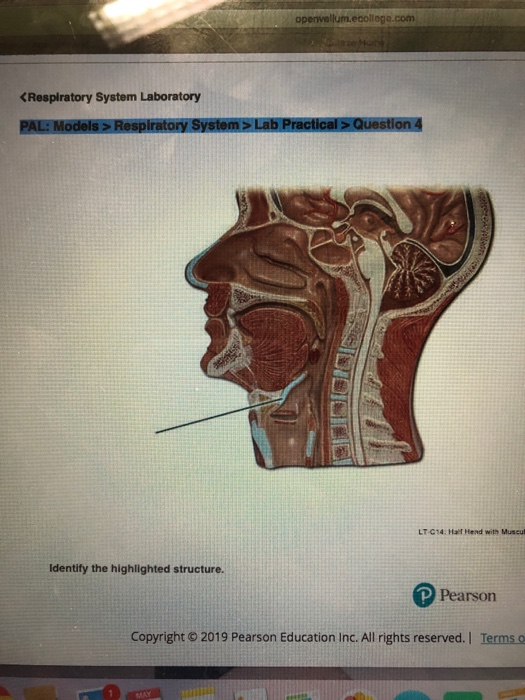HAN 202 01 Spring 2019 Course Home Respiratory Sys