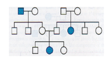 myopia domináns gén