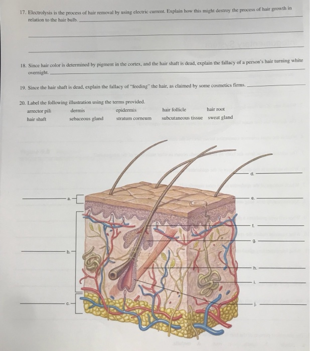 Solved I The Main Organ Of The Integumentary System Is T