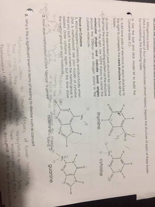 solved nitrogenous bases dna is composed of four nitrogen