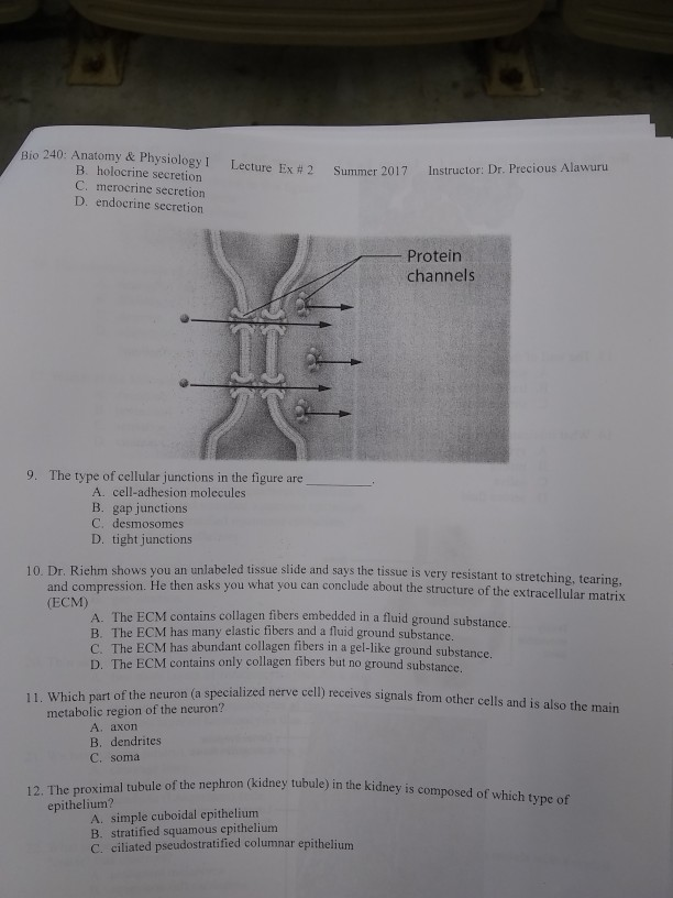 Solved: Bio 240: Anatomy & Physiology I B. Holocrine Secre ...