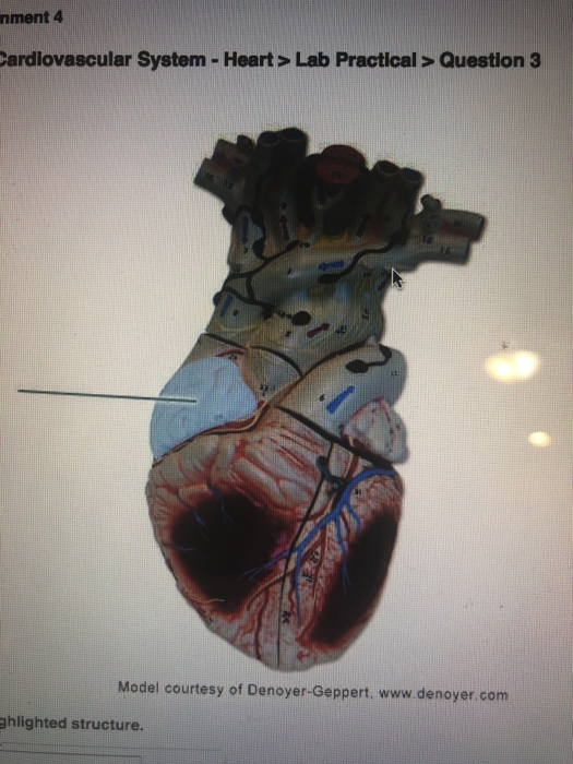 Nment 4 Ardlovascular System - Heart> Lab Practica