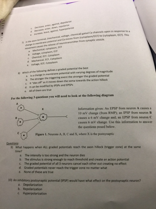 Solved Nervous System Worksheet 1 Which Of The Following