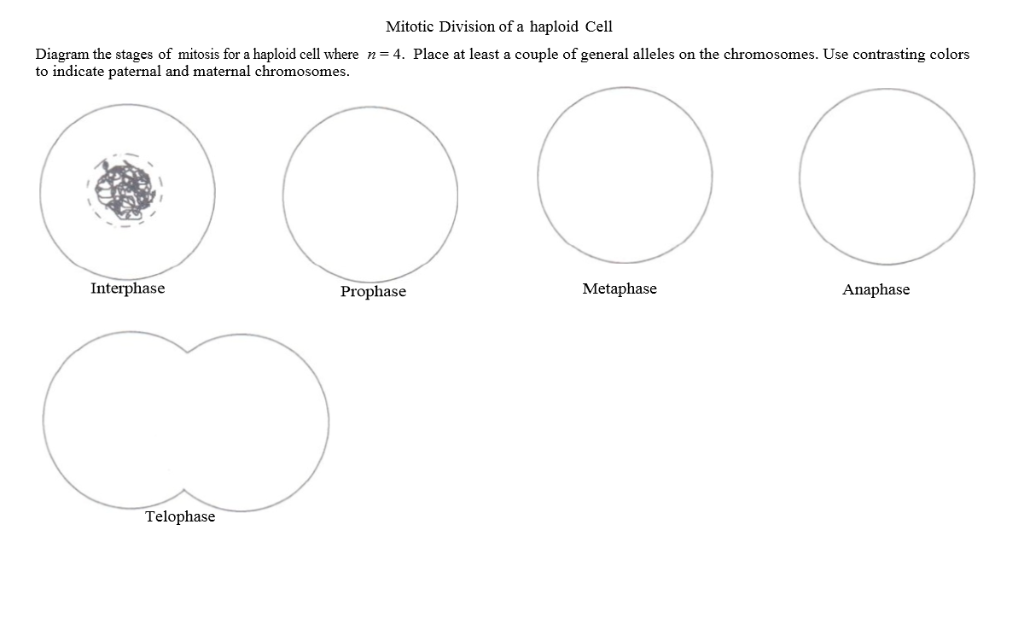Diagram Of Interphase