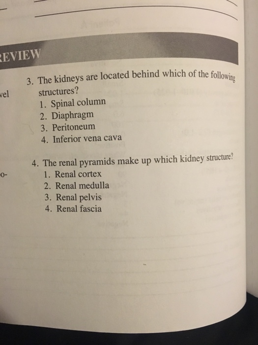 Solved Eview 3 The Kidneys Are Located Behind Which Of T