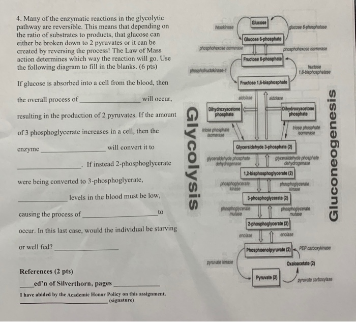 enzymatic diagram of glycolysis solved 4 many of the enzymatic reactions in the glycolyt  enzymatic reactions