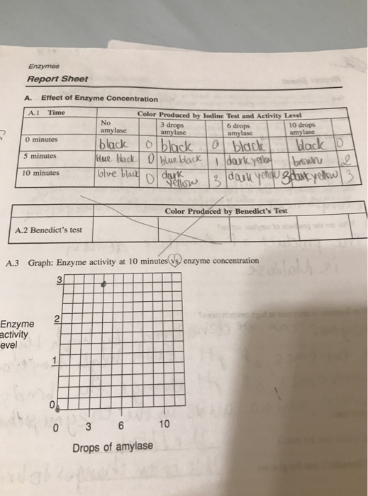 enzyme graphing activity worksheet answer key