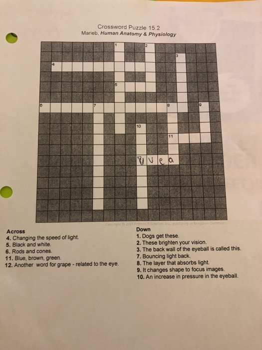 Solved Crossword Puzzle 152 Marieb Human Anatomy Phys